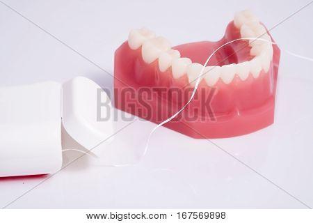 Dentist Demonstration Teeth Model And Dental Floss On White Background