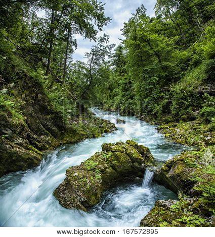 Radovna river meanders at the Vintgar Gorge, Slovenia