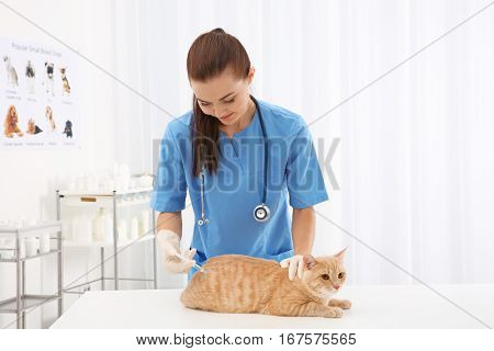 Pretty young veterinarian giving injection to red cat