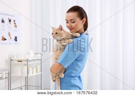 Pretty young veterinarian holding cat in vet clinic