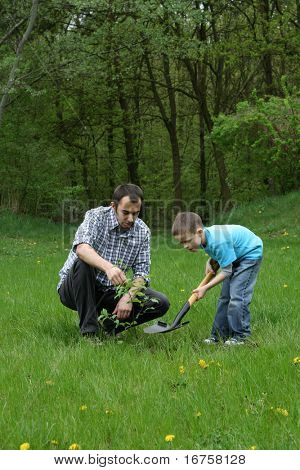 father and son planting a tree - working together