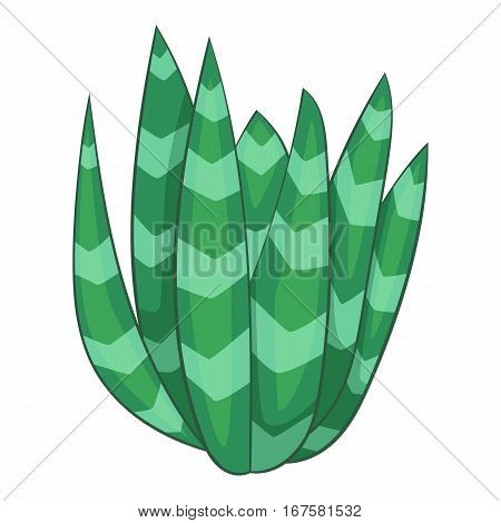 Spotted agave icon. Cartoon illustration of spotted agave vector icon for web