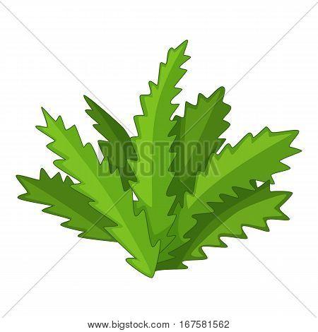 Longifolia cactus icon. Cartoon illustration of longifolia cactus vector icon for web