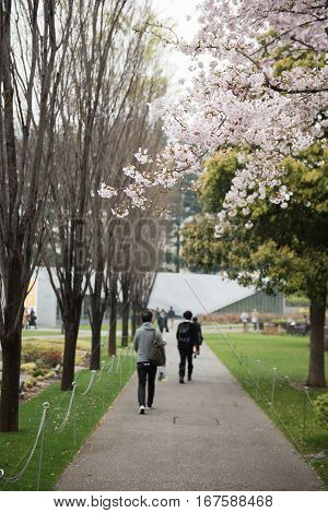 People are walking through a pavement inside a park. Trees full of flowers are seen on both sides of the path. On the background, lush green garden of the park is seen.