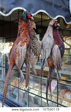 Two Brace Of Pheasants, A Popular Game Bird, Hanging Outside A Traditional Butchers Shop