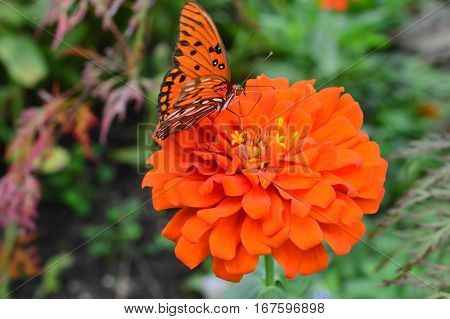 Red Butterfly On The Flower