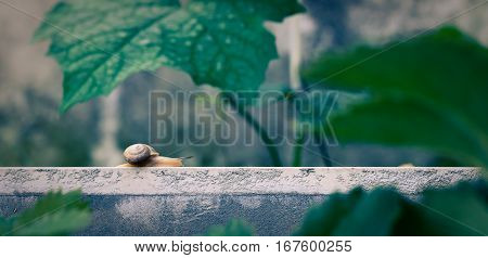 A small snail is moving with some big leaves around.