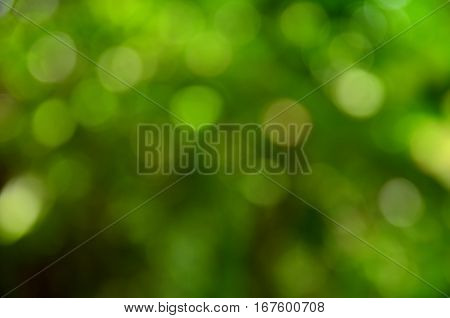 Background blur of dark forest in abstract form.