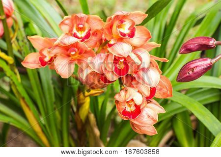 orange cymbidium flower, beauty in nature