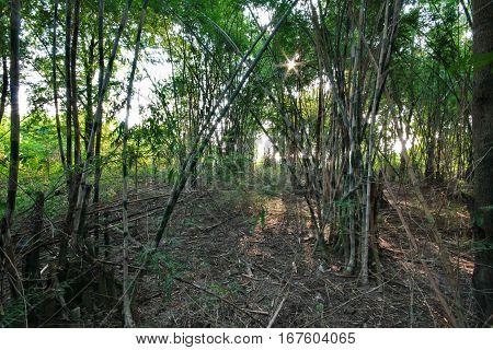 Garden Bamboo Canes That Grow Naturally Release.