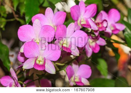 Orchid pink and white in garden,Bouquet of flowers orchids.