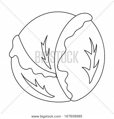 Cabbage icon outline. Singe vegetables icon from the eco food outline. - stock vector