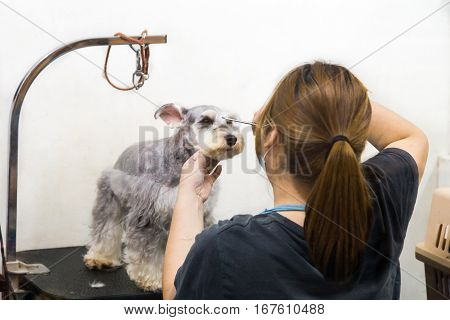 Groomer Trim Groom Pet Dog With Scissor In Salon