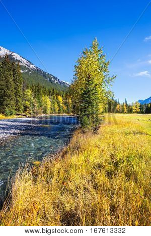 The drying-up stream in the mountain valley park Banff. Sunny autumn day in the Rocky Mountains of Canada