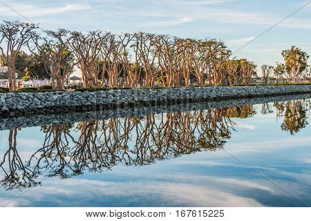 A line of coral trees reflecting into the bay at Embarcadero Marina Park South in San Diego, California.