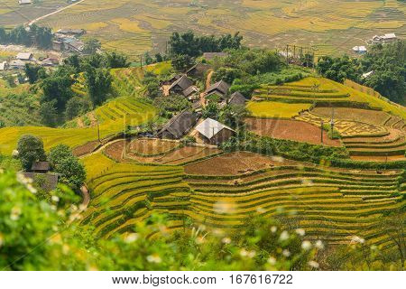 Terraced rice field landscape near Sapa in Vietnam. Mu Cang Chai Rice Terrace Fields stretching across the mountainside layer by layer reaching up as endless with about 2200 hectares of rice terraces of which 500 hectares of terraces of 3 communes such as
