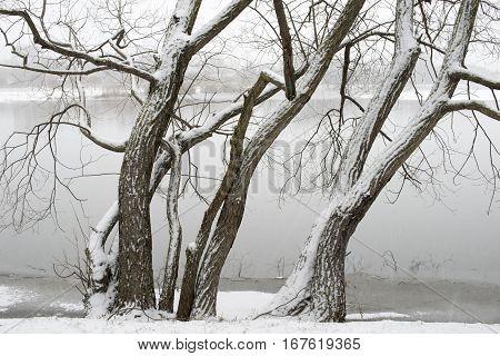 Winter Trees Shore