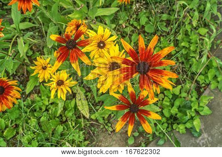 Blanketflowers or blanket flowers are brightly colored perennials
