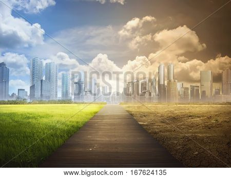 Landscape Of Timber Pathway With The Changing Environment
