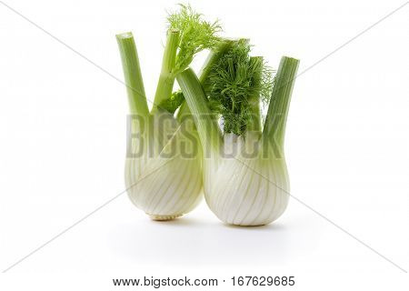 Fennel Bulb. Two fresh fennel bulbs with leaves on white background.
