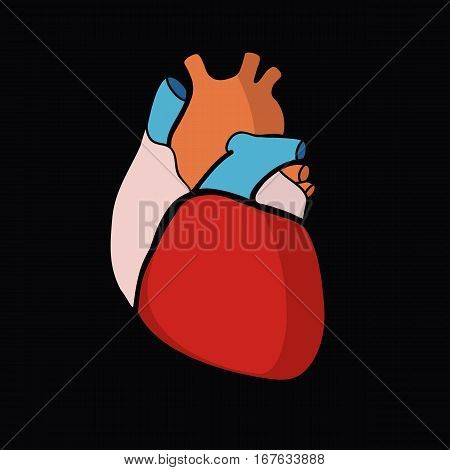 Schematic representation of the human heart. Color image on a light background