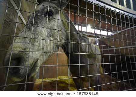 Gray horse head close up in a stable