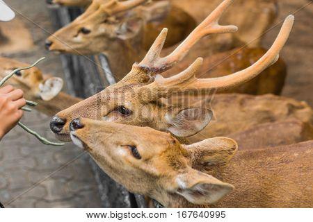 Deer In The Daytime.
