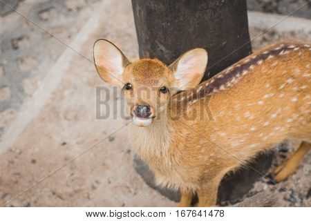 Fawn In The Daytime.