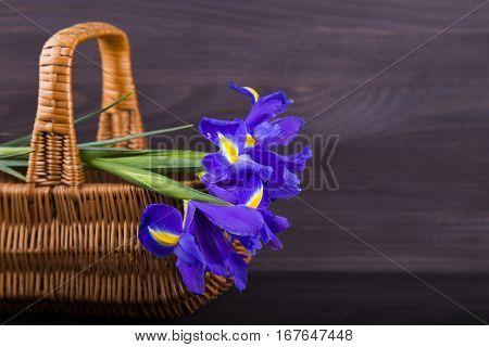 Bouquet Of Irises In Wicker Basket On Dark Wooden Background