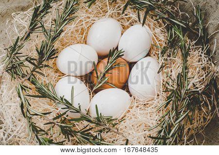 Chicken eggs in nest. Food farm, chicken