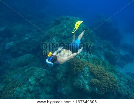 Man snorkeling in sea. Male snorkel dives to sea bottom with marine animals and plants. Underwater swimming or freediving equipment. Coral reef ecosystem and human concept image. Underwater nature