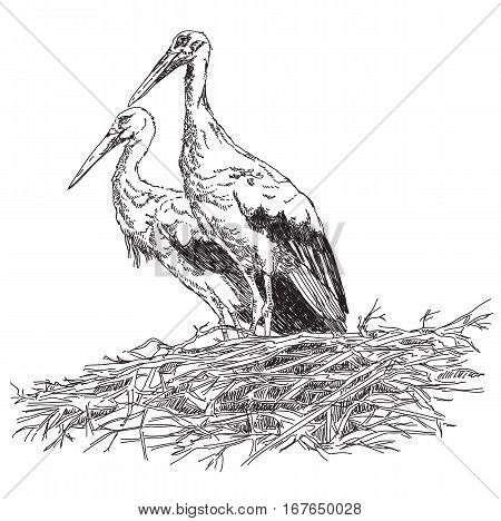 Pencil drawing Storks couple in the nest vector illustratoin