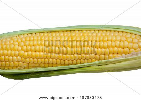 closeup grain isolated produce ripe table natural preparation delicious agriculture seeds green white sweet organic leaf field yellow growing crop pile maize summer farm husk cereals vegetable sweetcorn trend season farming lying healthy young collection