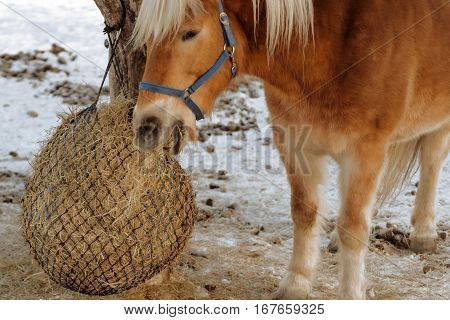 horse hay snow winter cabin traditional alpine life