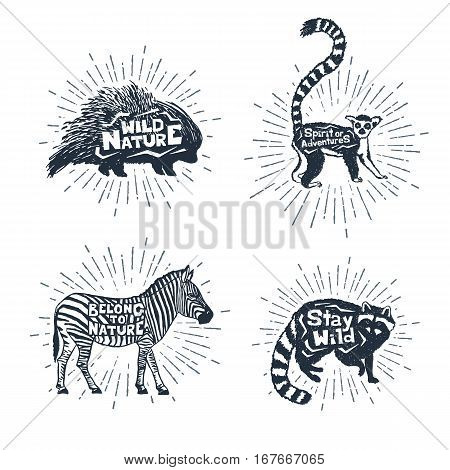 Hand drawn textured vintage badges set with porcupine lemur zebra and raccoon vector illustrations and inspirational lettering.