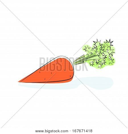 Carrot with Tops of Vegetable, Root Vegetables Isolated on White Background