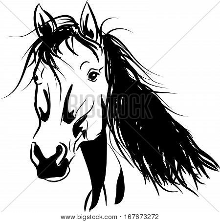 Vector illustration of horse head with long mane
