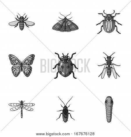Insects set icons in monochrome design. Big collection of insects vector symbol stock illustration