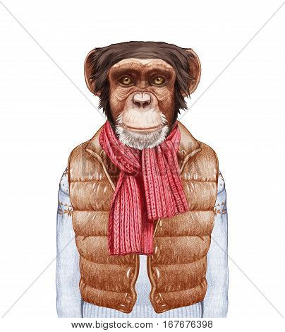 Animals as a human. Portrait of Monkey in down vest, sweater and scarf. Hand-drawn illustration, digitally colored.