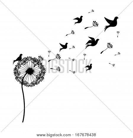 silhouette dandelion with fly birds vector illustration