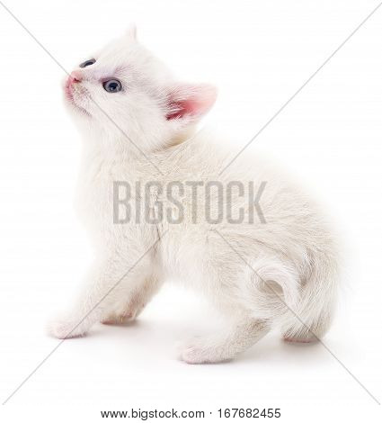 Small white kitten isolated on white background.