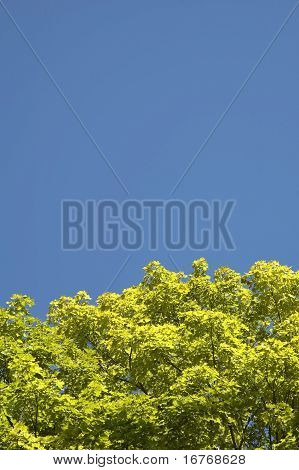 Yellow Leaves On Blue Sky