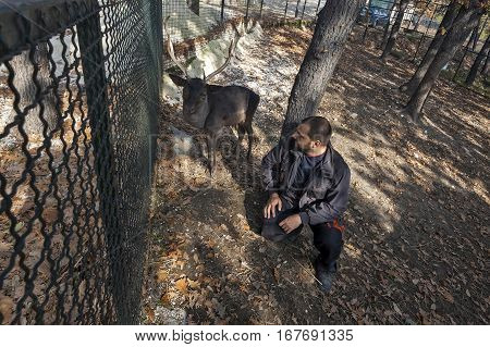 Bor Serbia - October 24 2013: Fallow dear behind fence in cage ZOO Bor Serbia