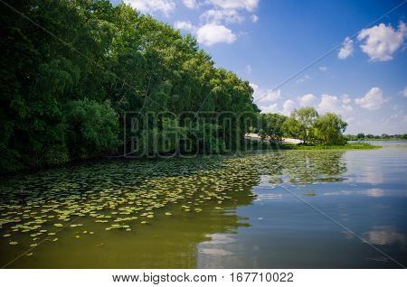Landscape of a river with lily pad. Beautiful summer landscape.