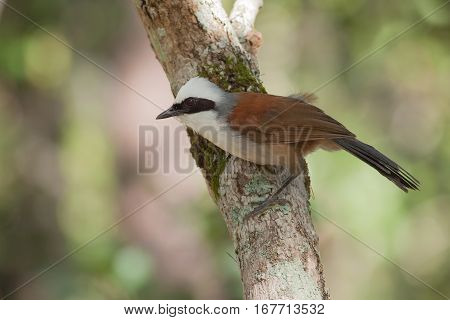 The bird seek a food on the tree stick