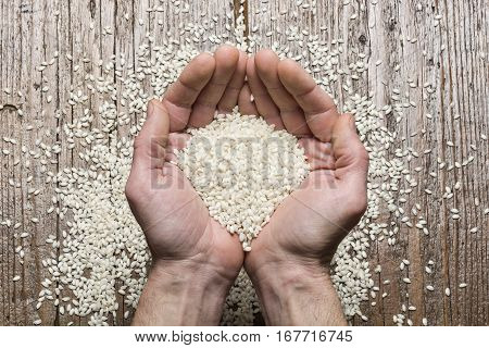 heap of rice in human hands on wooden table.