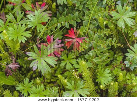 Plants And Leaves Background