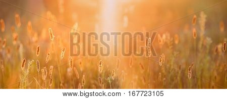Close Up Meadow Grass In Yellow Sunlight And Bokeh, Boke Background. Later Summer Or Early Autumn Season. Sunset Sunrise Over Field Meadow Grass