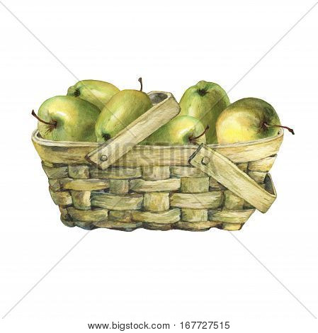 Wicker basket of veneer, filled with fresh green apples. Hand drawn watercolor painting on white background.