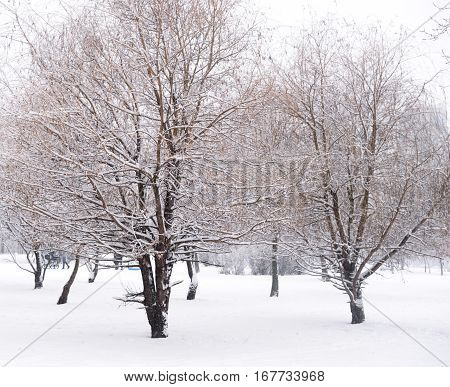 Winter scene with a fresh cover of snow on branches.